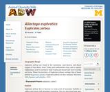 Allactaga euphratica: Information