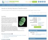 Bacteria Transformation