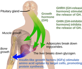 Biology, Animal Structure and Function, The Endocrine System, Regulation of Body Processes