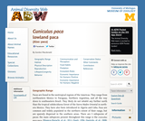 Agouti paca: Information