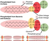 Biology, Biological Diversity, Prokaryotes: Bacteria and Archaea, Structure of Prokaryotes