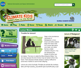 Climate Kids: Lemur Moms