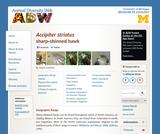 Accipiter striatus: Information