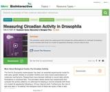 Measuring Circadian Activity in Drosophila