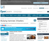 Studying Mammals: Chisellers