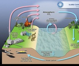 MISA HS Sample Item - Energy & Carbon Cycle (ESS/PS)