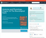 Anatomy and Physiology: Chapter 16 The Neurological Exam