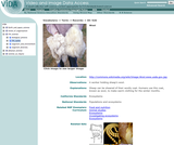 Animal Products: Wool