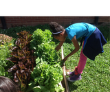 Veggie Bed Multiplication -- Out Teach