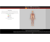 Vital: An Interactive Guide to the Effects of VITamins & minerALs in the body systems