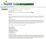 Investigating Insects in Nature