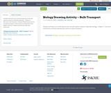 Biology Drawing Activity -- Bulk Transport