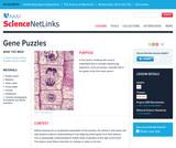 Gene Puzzles