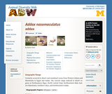 Addax nasomaculatus: Information