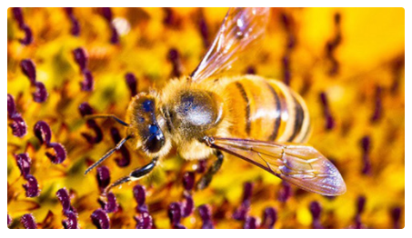 1. Hive Alive! Sweet Virginia Foundation: Bee Bodies Lesson