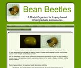 Bean Beetles A Model Organism for Undergraduate Laboratories