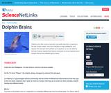 Dolphin Brains