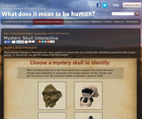 Mystery Skull Interactive | The Smithsonian Institution's Human Origins Program