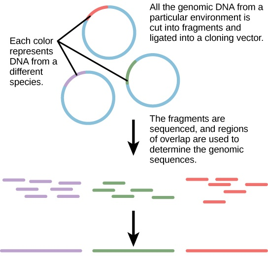 Applying Genomics