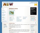 Atelopus varius: Information