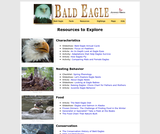 Seasonal Migrations: Bald Eagle