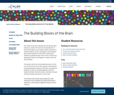 Allen Institute: The Building Blocks of the Brain