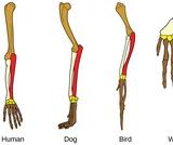 Biology, Evolutionary Processes, Evolution and the Origin of Species, Understanding Evolution