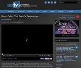 Grey Matters: Stem Cells - The Brain's Beginnings