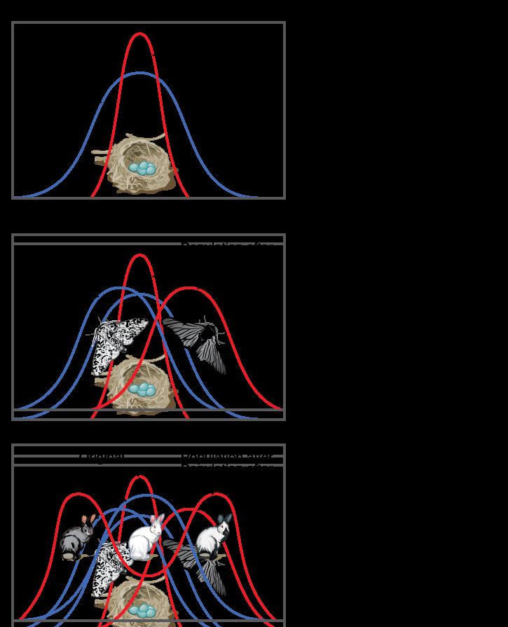 Adaptive Evolution