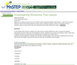 Investigating Tree Leaves