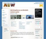 Aechmophorus occidentalis: Information