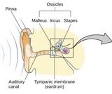 Psychology, Sensation and Perception, Hearing