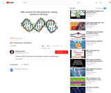 DNA Transcription and Translation Video