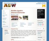 Aneides lugubris: Information