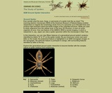 SEM Ground Spider Interactive