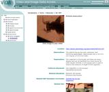 Artemia observation