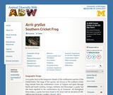 Acris gryllus: Information