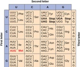 Biology, Genetics, Genes and Proteins, The Genetic Code