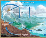 Biology, Ecology, Ecosystems, Biogeochemical Cycles