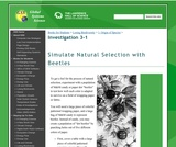Simulate Natural Selection With Beetles
