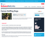 Cancer-Sniffing Dogs