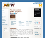 Acomys russatus: Information