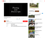 Planting Brassica rapa
