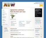 Agalychnis callidryas: Information