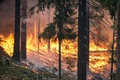 Forest Fires / Wildfires