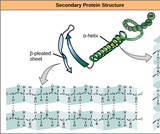 Biology, The Chemistry of Life, Biological Macromolecules, Proteins