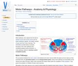 Motor Pathways - Anatomy & Physiology