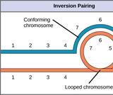 Biology, Genetics, Modern Understandings of Inheritance, Chromosomal Basis of Inherited Disorders