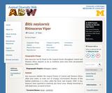 Bitis nasicornis: Information