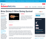 Brine Shrimp 2: Brine Shrimp Survival